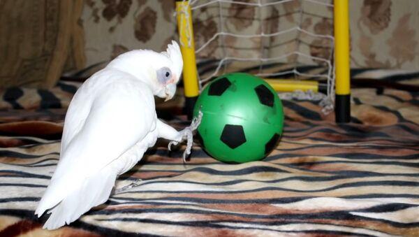 Soccer Cockatoo - Sputnik International