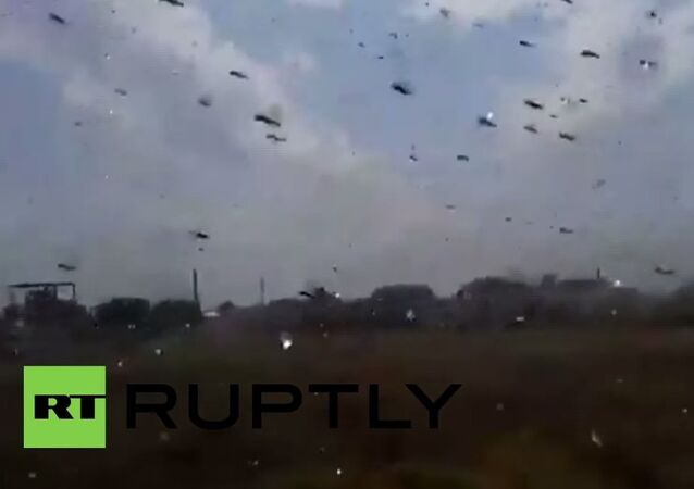 Plague of locusts descends on Stavropol