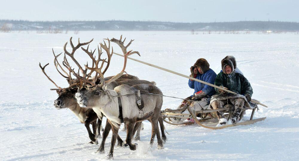 Reindeer Herder's Day near Yamal Peninsula (northwest Siberia)