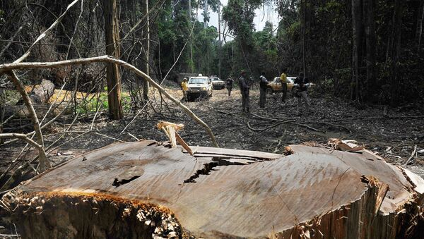 Members of the Chico Mendes Environmental Institute find an illegal woodcutting site at the Trairao Amazonic forest reserve, west of the Para state, northern Brazil - Sputnik International