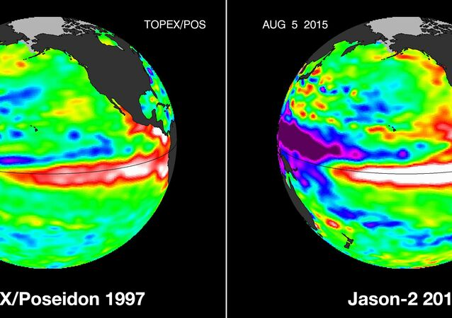 These false-color images provided by NASA satellites compare warm Pacific Ocean water temperatures from the strong El Nino that brought North America large amounts of rainfall in 1997, left, and the current El Nino as of Aug. 5, 2015, right.