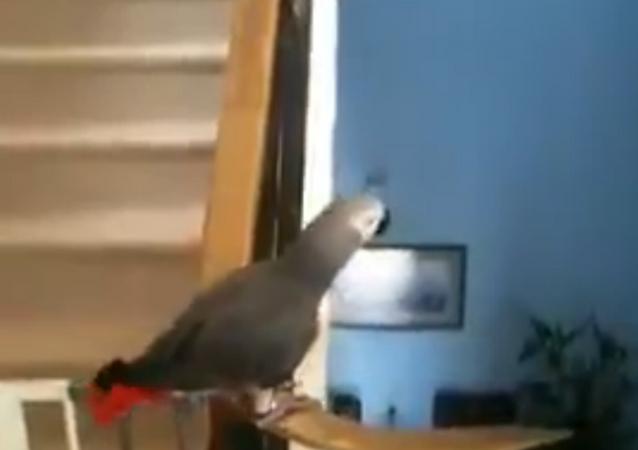 Parrot Loves to Slide