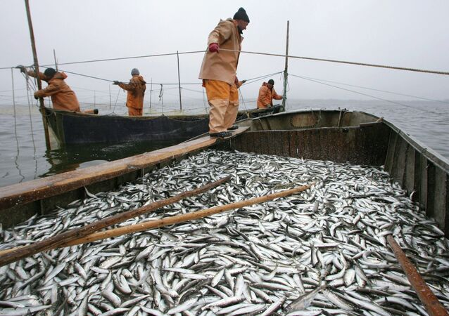 US, Russia to Sign Bilateral Agreement to Combat Illegal Fishing
