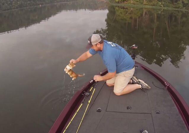 Alabama fishermen rescue kittens from Warrior River