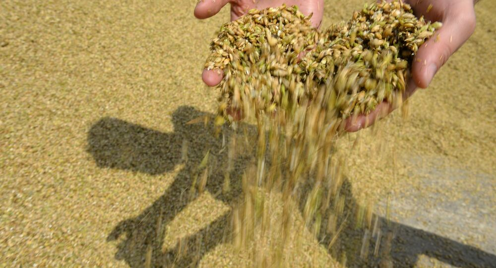 Grain squashed during crop harvesting