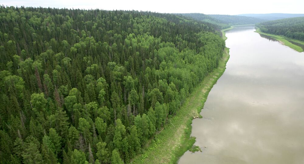 View of the taiga in the Yenisei District of Russia's Krasnoyarsk Territory.