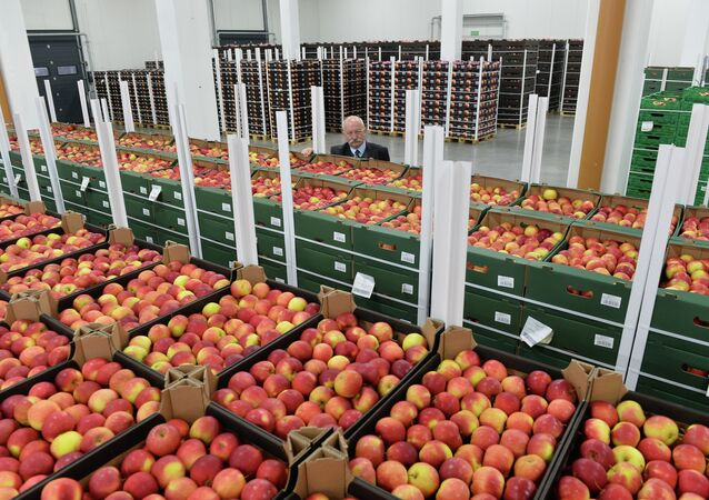 Roman Jagielinski, Polish president of group fruit growers in Regnow poses behind boxes with apples in Polish fruit factory Roja in Regnow, Poland