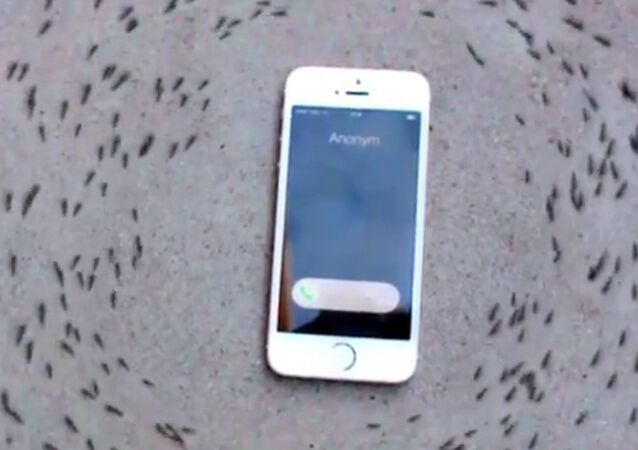 Ants Circling an iPhone