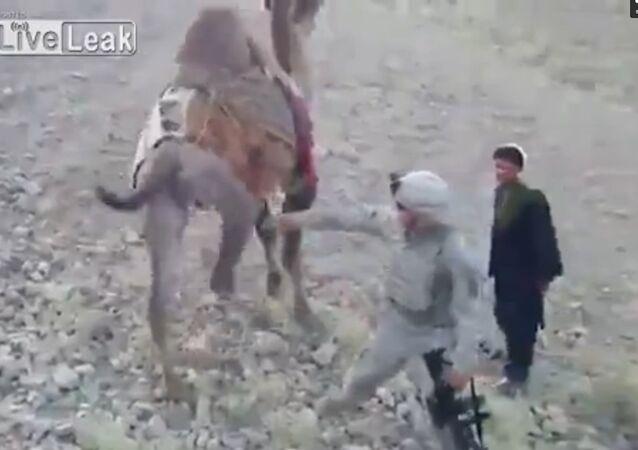 Taliban Camel Gives US Soldier A Good Kick