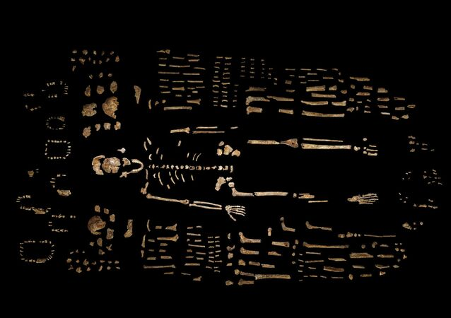 This photo provided by National Geographic from their October 2015 issue shows a composite skeleton of Homo naledi surrounded by some of the hundreds of other fossil elements recovered from the Rising Star cave in South Africa