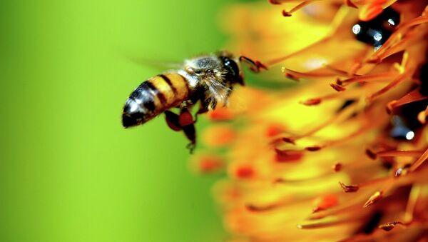 A bee - Sputnik International