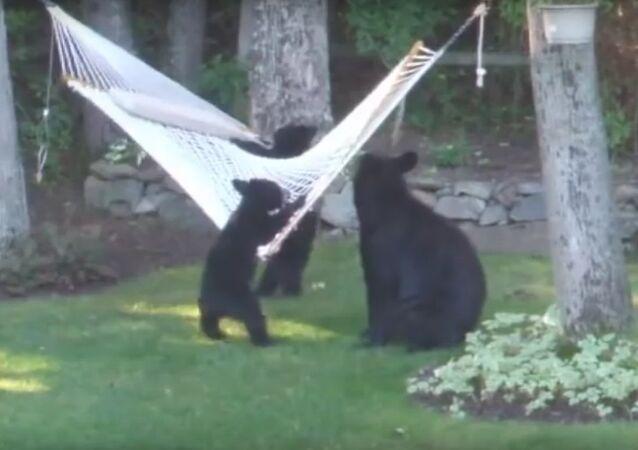 The story of three bears, modern edition.