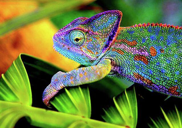 Chameleon-Inspired E-skin