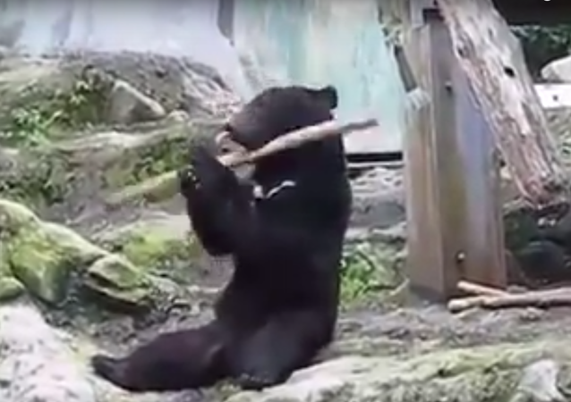 Talented bear shows off his skills.