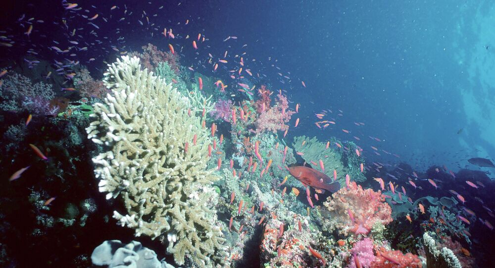 Coral reef, Pacific