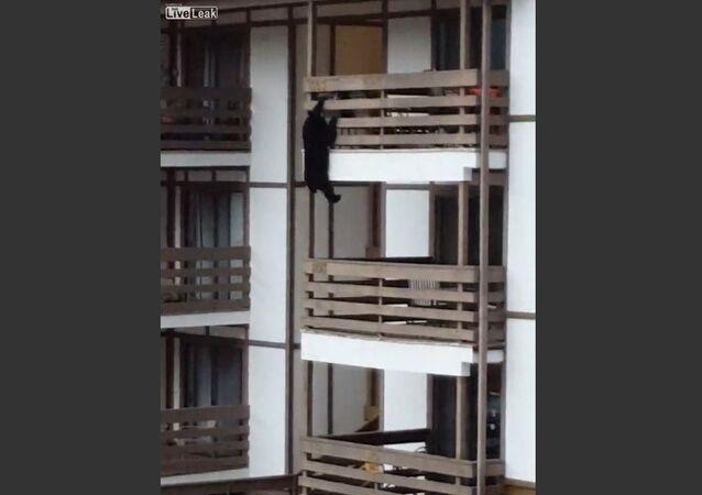 Bear Decides to Climb Condo Building