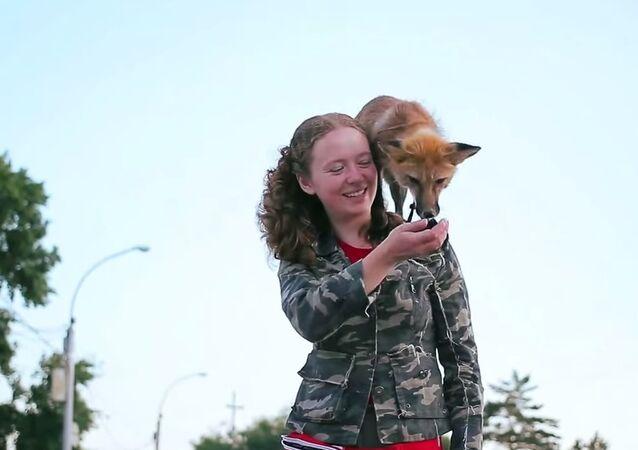 Fox in Novosibirsk