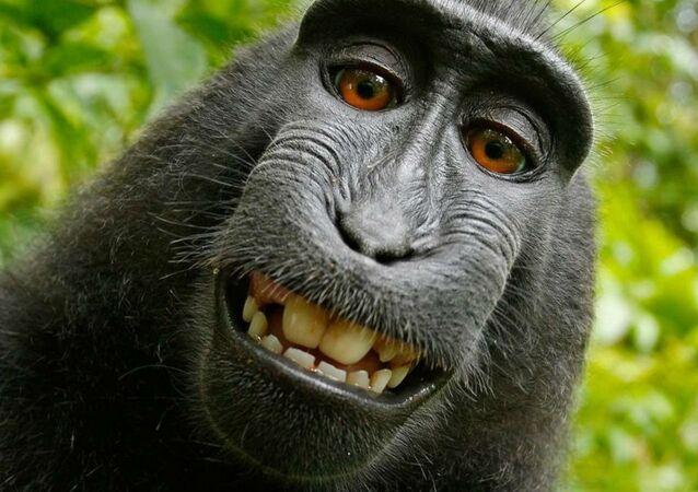 PETA monkey selfie