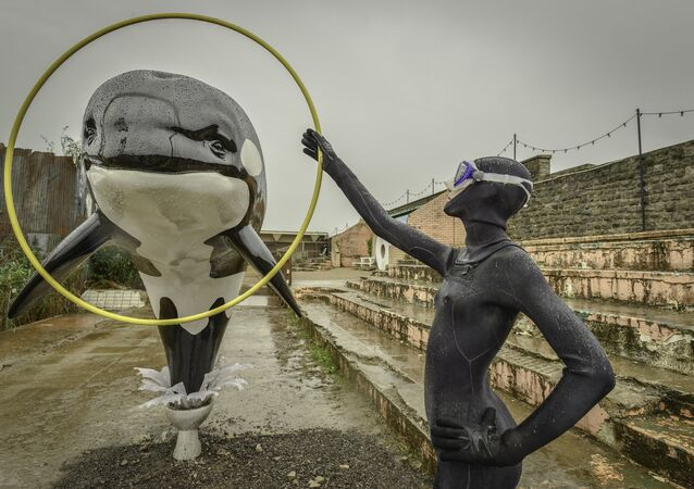 An installation of a killer whale jumping out of a toilet and through a hoop.