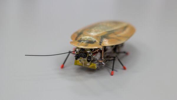 Roach from BFU - Sputnik International