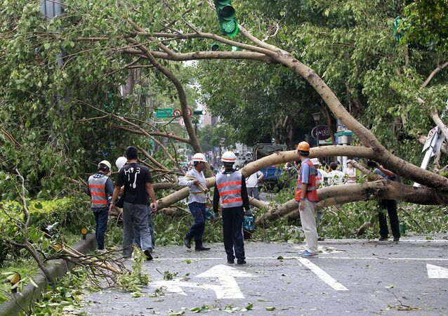 Workers remove trees uprooted by strong winds from Typhoon Dujuan, in Taipei, Taiwan, September 29, 2015