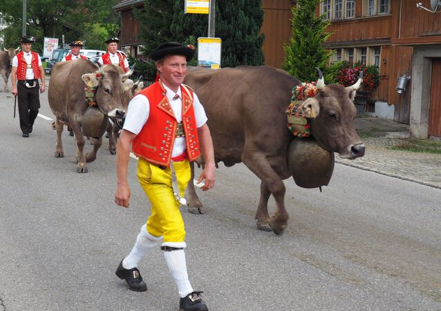 This Sept. 19, 2015 photo shows men in local costume taking part in the Swiss Alpabzug, a celebration of the descent of dairy cows and goats from high Alpine pastures, in Urnaesch, Appenzellerland, in Switzerland