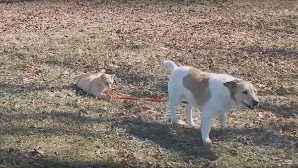 Cat Won't Let Dog off the Leash - Sputnik International