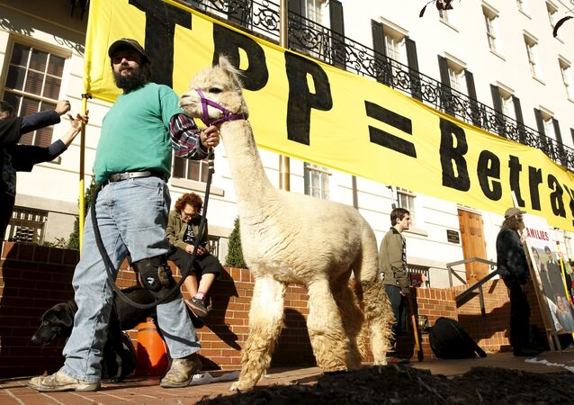 Farm activist Ethan Abbott walks with his alpaca during a protest of the TPP (Trans-Pacific Partnership) held outside the Office of the U.S. Trade Representative in Washington, November 16, 2015