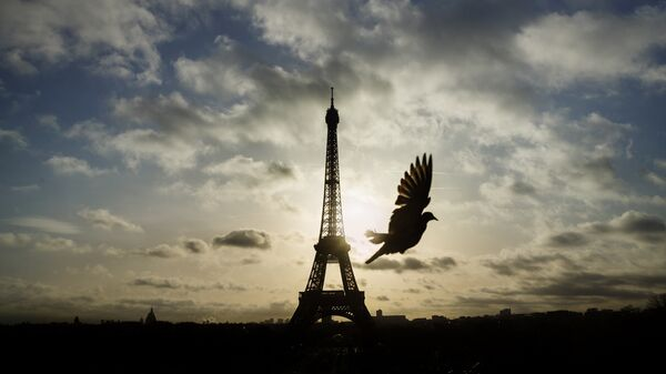 A bird flies in front of the Eiffel Tower ,which remained closed on the first of three days of national mourning, in Paris, Sunday, Nov. 15, 2015.  - Sputnik International