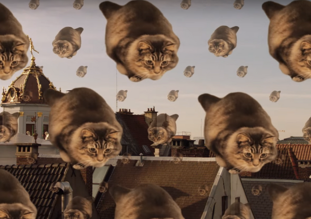 Silver Lining: Surreal Cat Tourism Ad Emerges from Brussels Lockdown