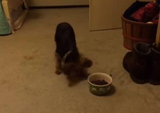 Pippin's meal ritual