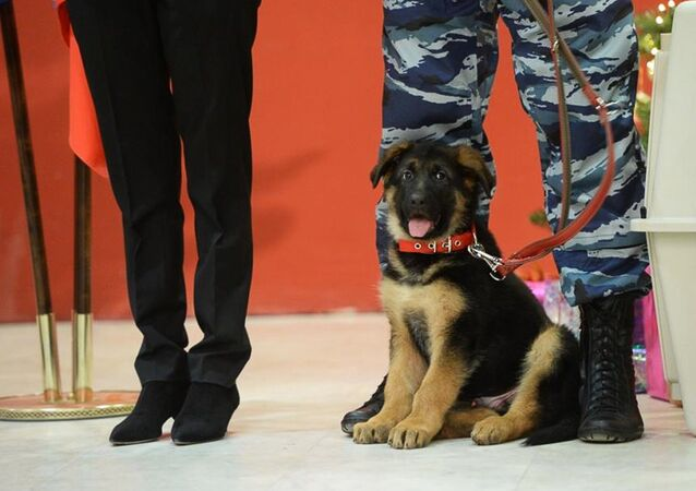 Russia sends puppy Dobrynia to French police