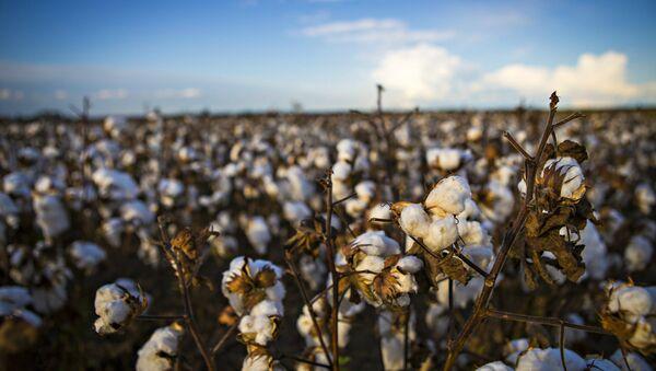 Cotton - Sputnik International