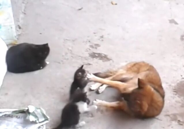 Mother cat with kittens came to old friend