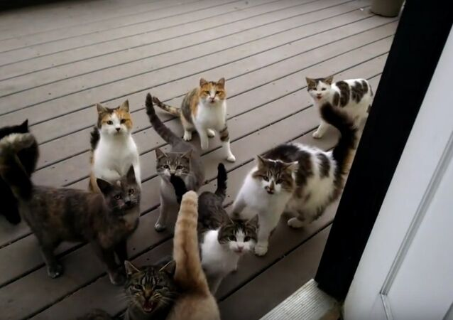 Daily routine - a flock of cats begging for food