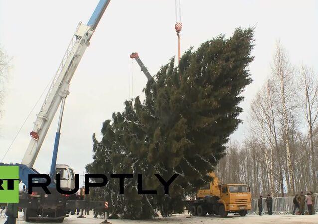 Kremlin Christmas tree chosen after six-month 'beauty contest'
