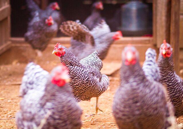 Chicken March