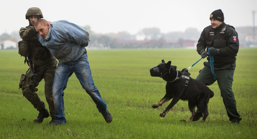 A Slovak soldier (L) and a Slovak policeman (R) with a dog detain a man playing the role of an illegal migrant during a joint exercise of Slovak police and Slovak Army, focused on protecting public order at the borders near Bratislava, on October 29, 2015