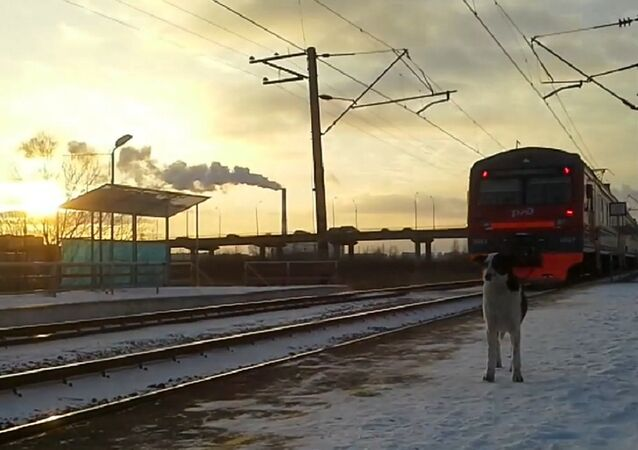 A member of the special rapid deployment force 'Lynx' received fatal injuries when he rescued a dog from an oncoming train in Moscow