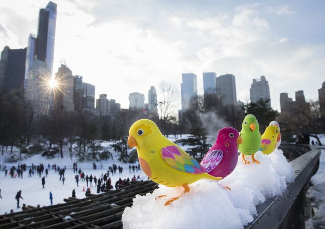 Winter Delight: Ice Skating Rinks Across the World