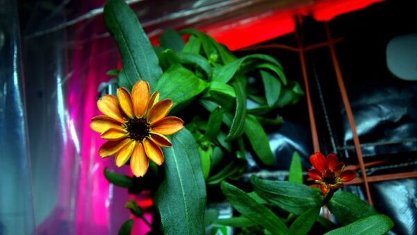 Space Flower - Sputnik International