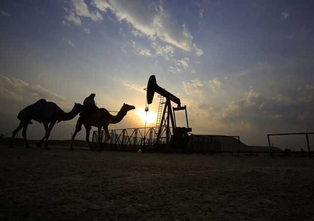 A man rides a camel through the desert oil field and winter camping area of Sakhir, Bahrain, Sunday, Dec. 20, 2015