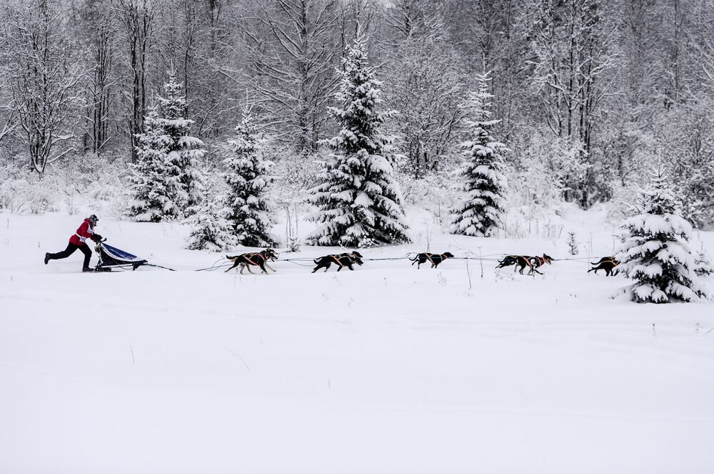On the Land of Sampo: Dog Sled Racing Across Russia