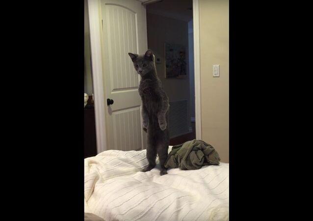 Standing curious cat..