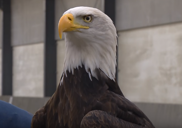 Dutch police may use eagles to stop errant UAVs.