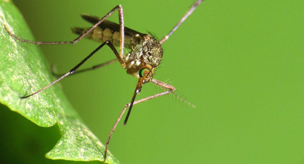 Does not transmit Zika virus!