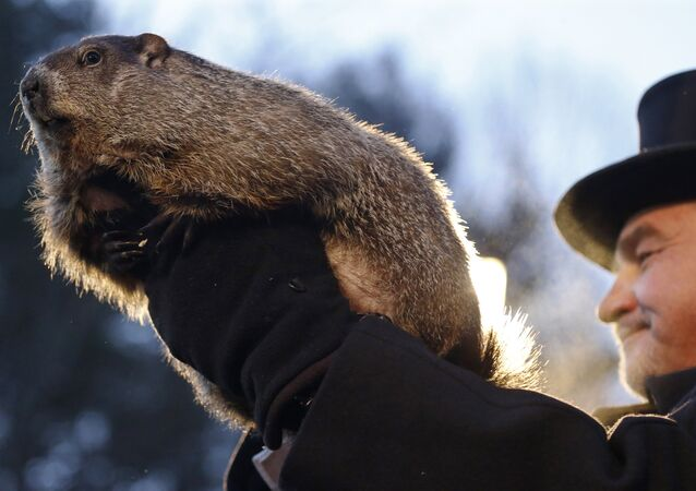 Groundhog Club co-handler John Griffiths holds Punxsutawney Phil during the annual celebration of Groundhog Day on Gobbler's Knob in Punxsutawney, Pa., Tuesday, Feb. 2, 2016