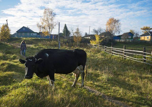 Fall in Russia's Omsk Region