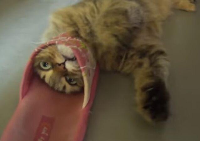 Playful cat got himself into trouble