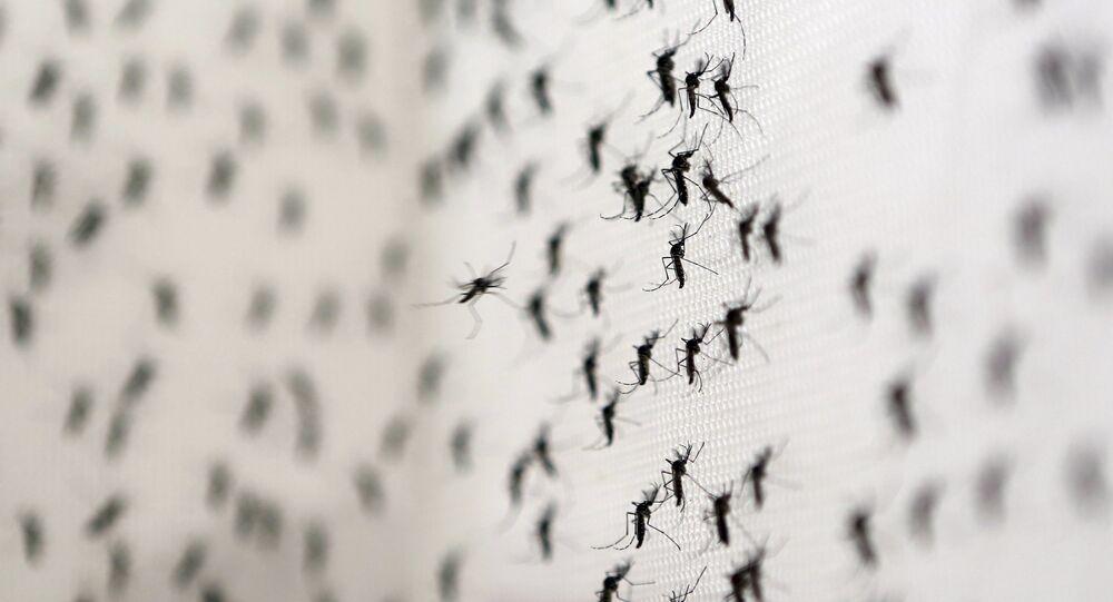 Zika virus mosquitoes
